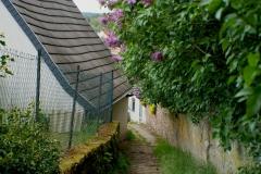 Dorf, Altleiningen, Fliederbäume